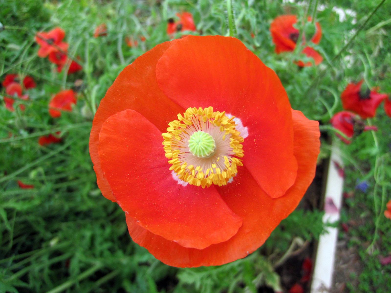 At Bang Elementary, Orange flower