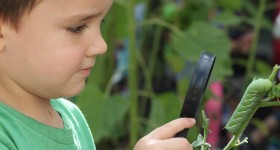 A school garden is more than just beautiful landscaping