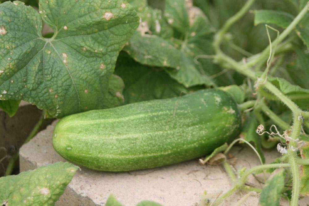 From CFISD Garden Fresh News – April