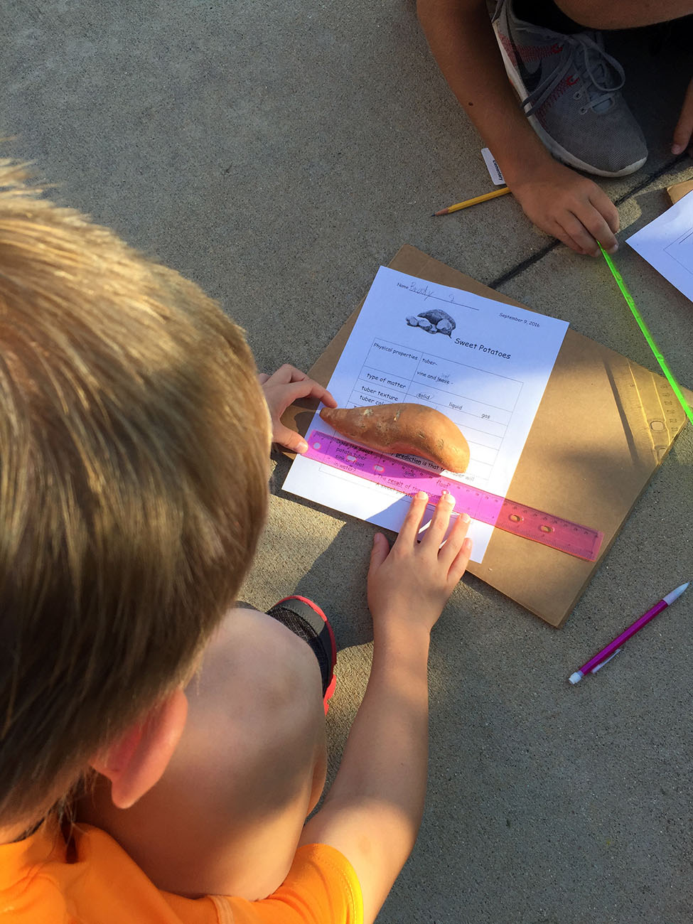 At Warner Elementary, Students measuring sweet potatoes and recording physical properties